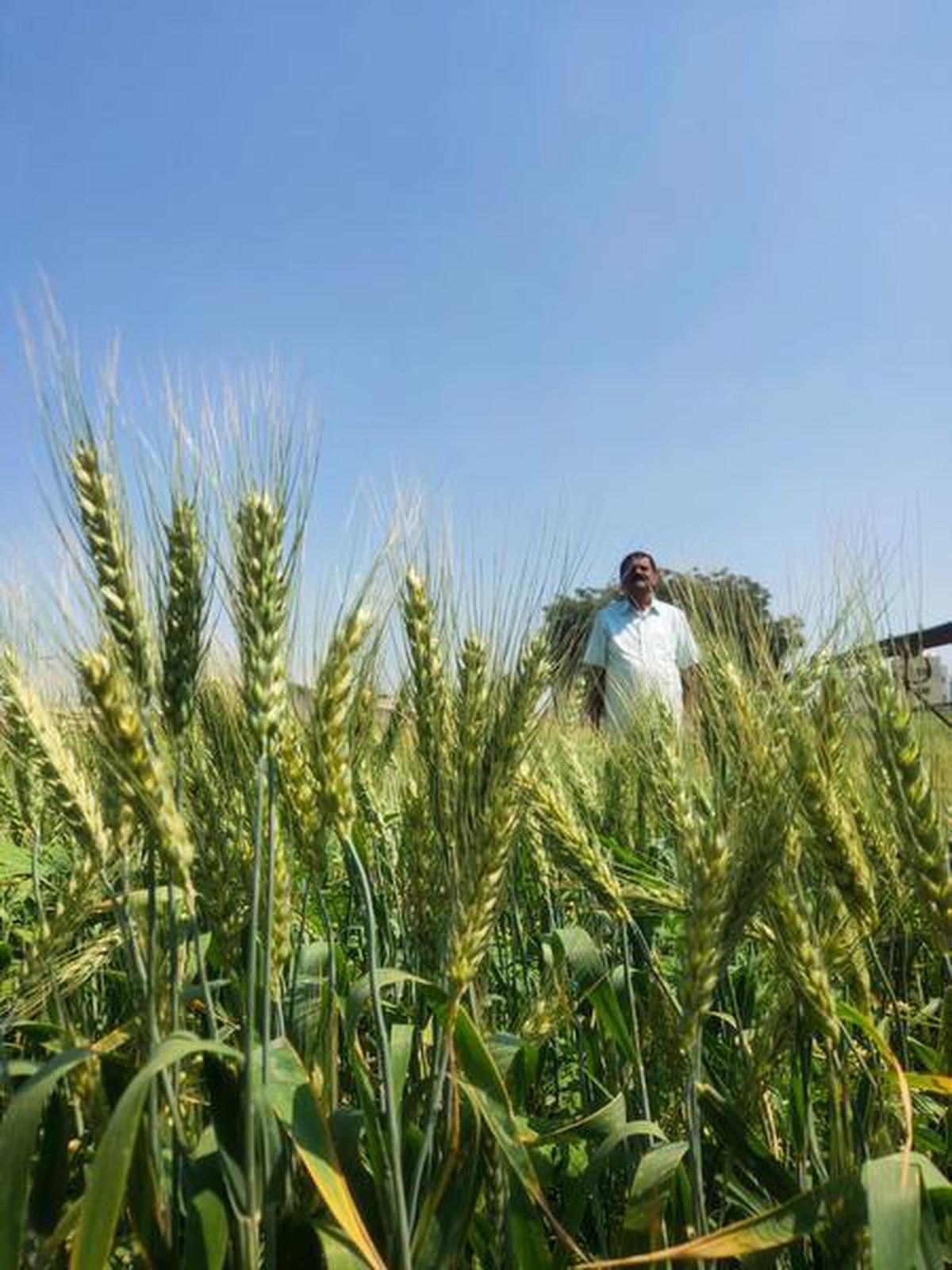 Hyderabad-based farmer Chintala Venkat Reddy wins patent for Vit D enriched rice and wheat