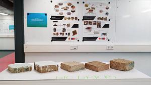 IIT-H partners with Odisha tech institute to develop bio-brick