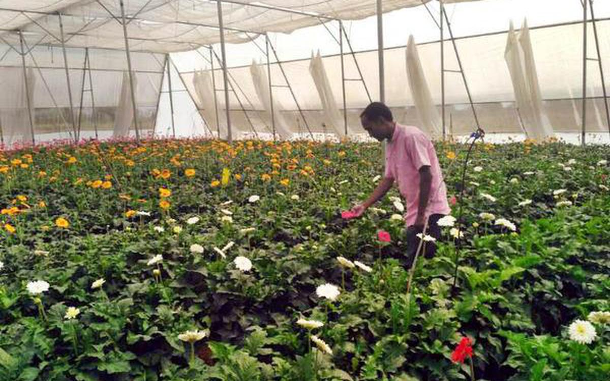 Floriculturists Look For Remunerative Price The Hindu