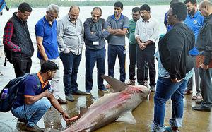 Foreign team visits Munambam harbour