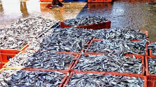 Checks on juvenile fishing intensified