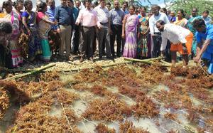 NITI Aayog for action plan to promote seaweed cultivation