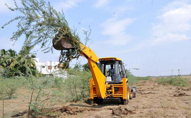 Concern over delay in enacting law to remove seemai karuvelam trees