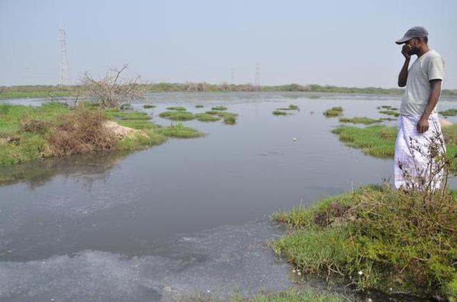 Tamil Nadu Rivers Review 2017 Despite Drought Diversion