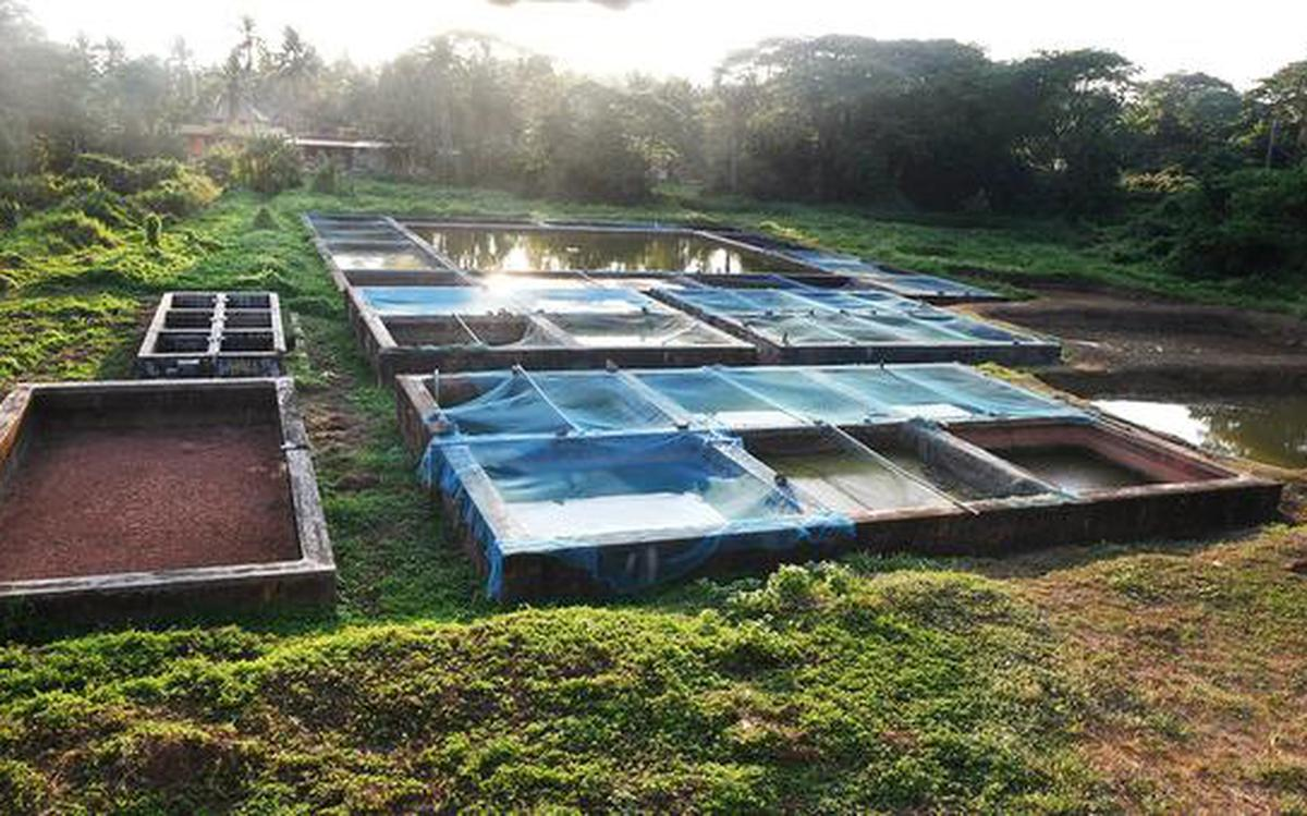 College Of Fisheries To Moderniseits 22 Acre Aquaculture Farm The Hindu
