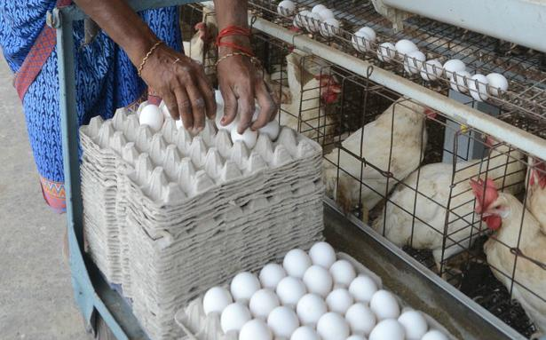 Wholesale price of eggs continues to remain high