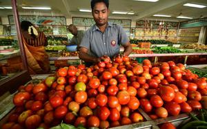 Due to heavy arrivals, price of tomato dips to ₹10 per kg
