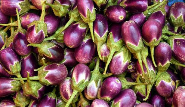 Prices of tomato and brinjal drop - The Hindu