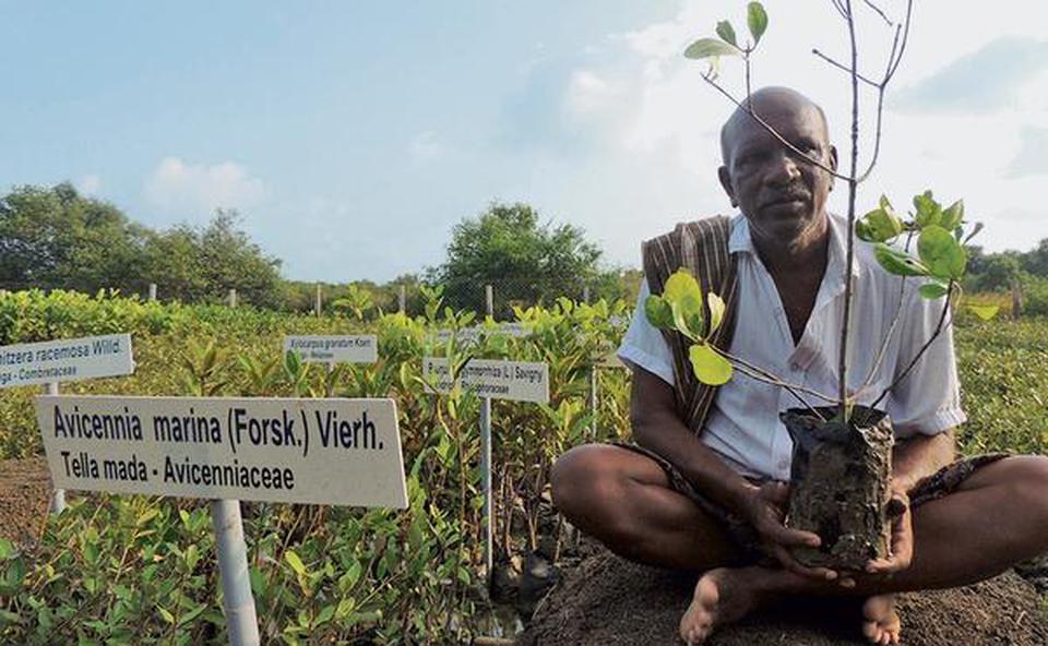 India mangroves
