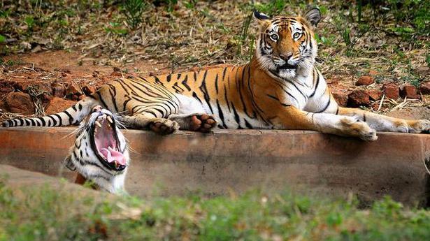 Bhutan, Nepal, Bangladesh to be part of India's tiger census