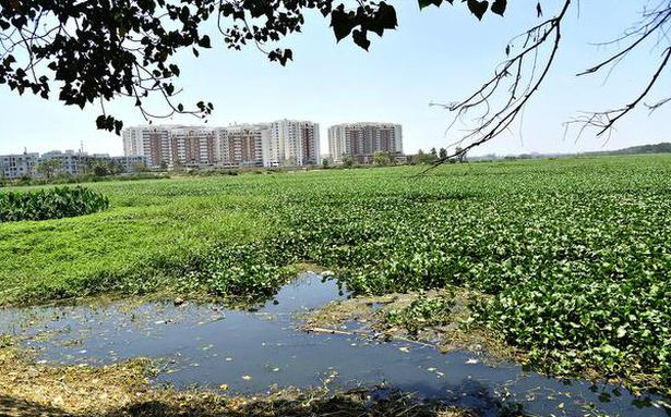 Agencies in a quandary over what to do with weeds from Bellandur lake
