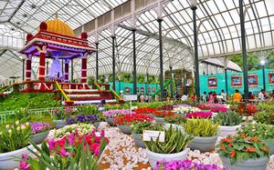 A peek into the flower show at Lalbagh Botanical Gardens