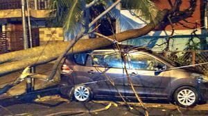 Heavy rain brings down trees