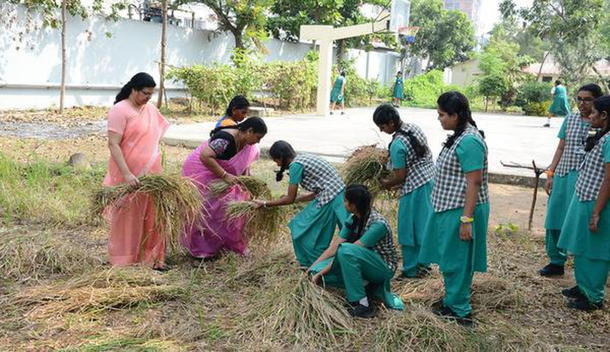 A Pongal harvest in heart of city