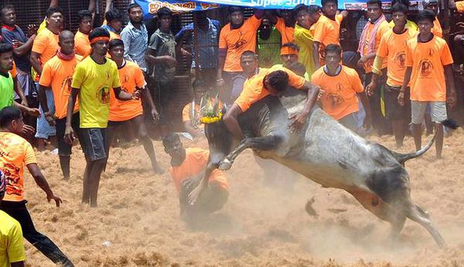 Authorities provided insurance coverage for bull tamers who participated in Jallikattu