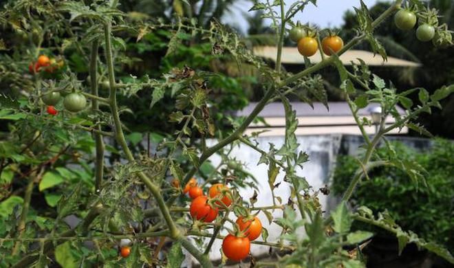 Kitchen garden kits subsidised the hindu kitchen garden kits subsidised solutioingenieria Image collections