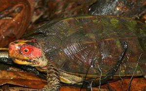 This World Turtle Day, spotlight on freshwater turtles