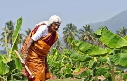 Padma Shri at 105, meet the Coimbatore grandma who is giving a leg up to organic farming - The Hindu