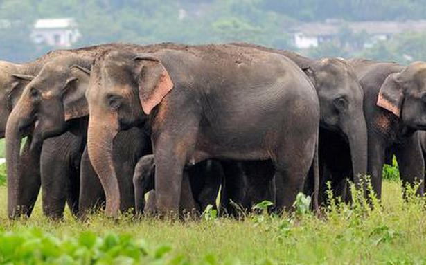 Elephant census from March 27