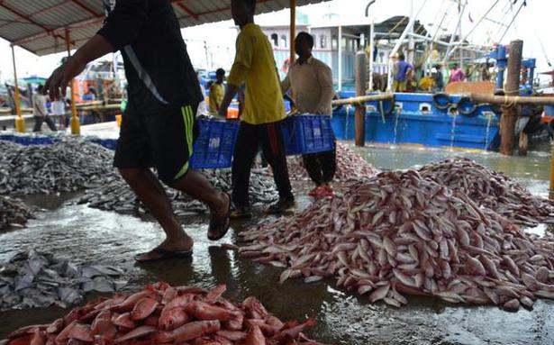 Fishing holiday: north Kerala to cope with rise in prices