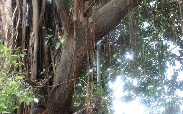 Tree felling continues in Mumbai