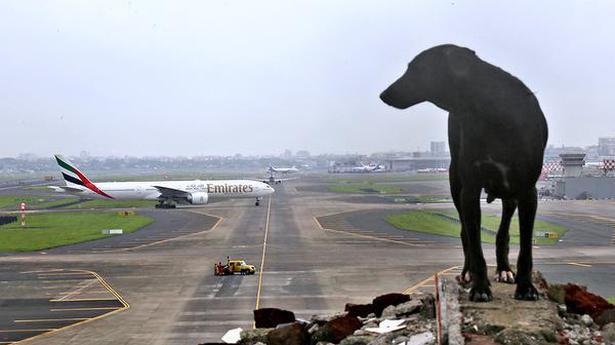 mumbai airport resumes flights mumbai nyoooz