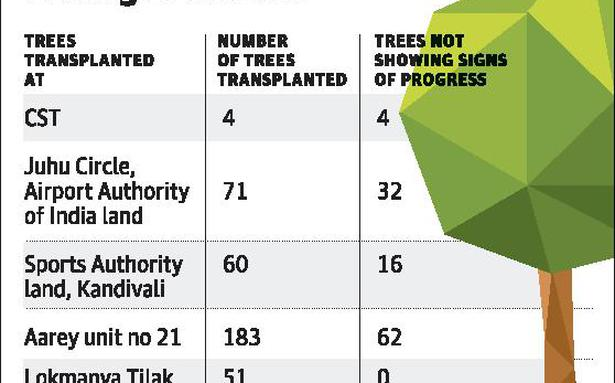 Metro 3: 30-35% transplanted trees nearly dead