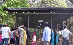 Mumbai zoo won't get lions for a while