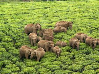 File photo of Karamalai Tea estate in the Valparai Plateau. Photo used for representative purposes only