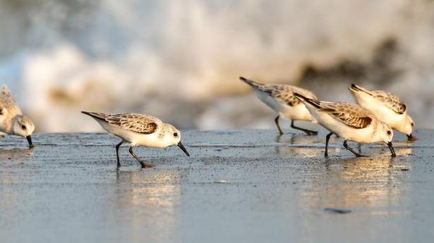 Bird census explores Coringa's fauna diversity