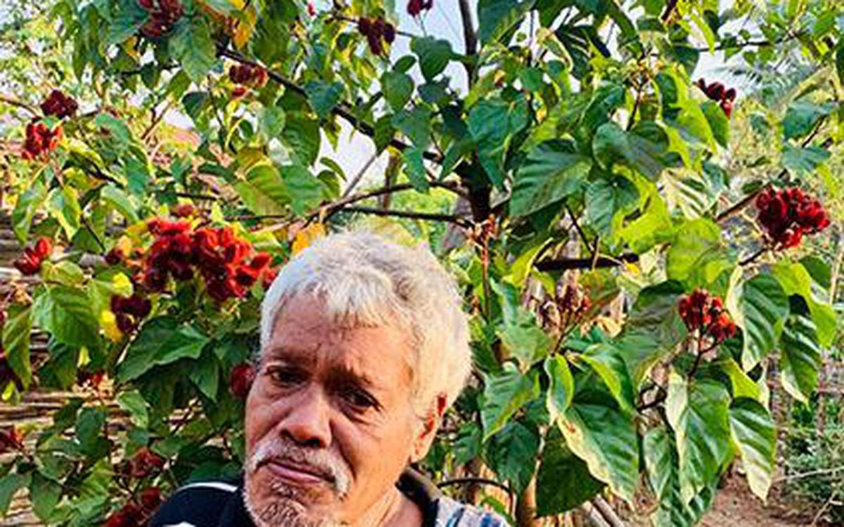 Lipstick seeds' grown by tribals in A.P. a big hit - The Hindu
