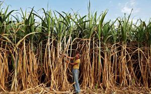 Govt hikes ethanol price to cut oil import bill by $1 billion