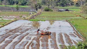 39 farmer suicides in Mysuru district since April 2019