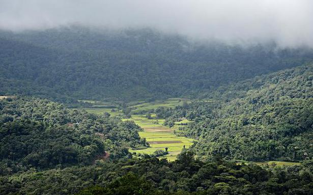 Green Cover Karnataka S Forests Grow But Not In Kodagu