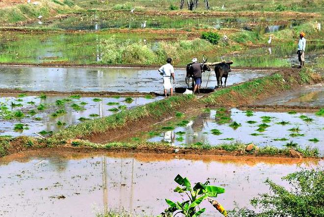 Farmers for policy initiatives to mitigate agricultural crisis
