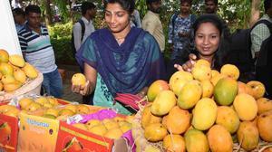 Mango Mela begins in Dharwad