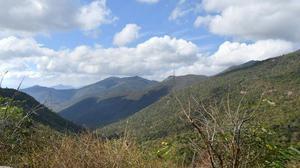 M.M. Hills Wildlife Sanctuary to get more anti-poaching camps