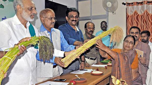 This repository in Shivamogga has 190 native paddy varieties - The Hindu ea3ab4a9c8fe8