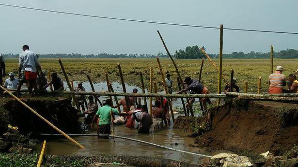 Kerala rain: Bund breach submerges harvest-ready crops at Upper Kuttanad in Alappuzha district