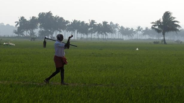 KAU to hold farmer- scientists interface on GI-tagged rice varieties