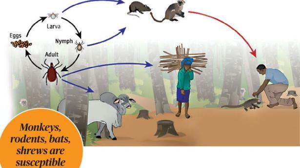 Kerala's battle against zoonotic diseases