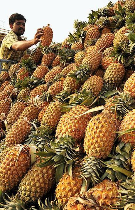 Pineapple farmers in Kerala seek govt. aid - The Hindu