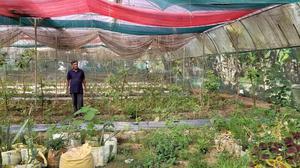 Farmers see a 'slaughterhouse of plants'