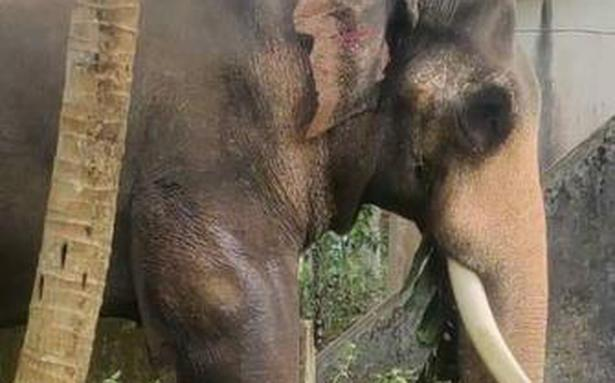 Much-loved jumbo's death raises a few questions