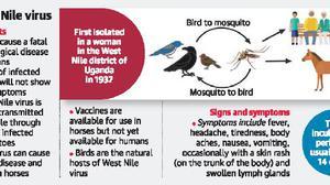 Alert after boy dies of West Nile fever