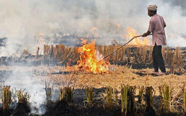 Punjab government faces heat over stubble burning