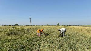 Gujarat announces ₹700 crore relief package for rain-hit farmers