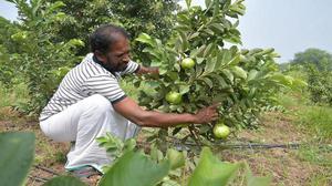 Organic farming gains ground in district