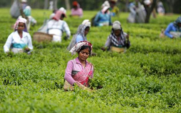 'Govt. focused on clearing tea subsidy dues'