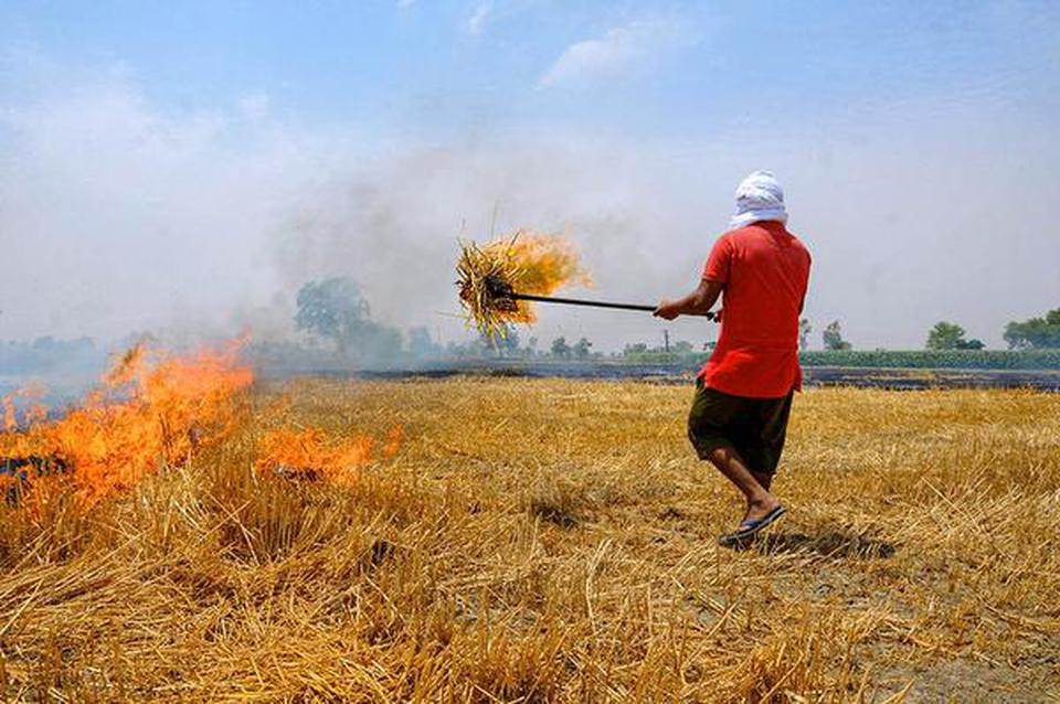 With wheat harvest over, Punjab registers spike in stubble burning - The Hindu
